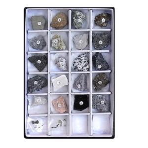MS007  岩石標本 22種(解説付)
