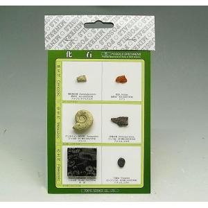 FS001  化石標本 6種(入門編) kinokuniya