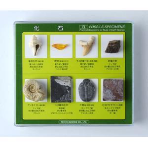 FS002  化石標本 8種(解説書付)地質年表と標本のセット kinokuniya