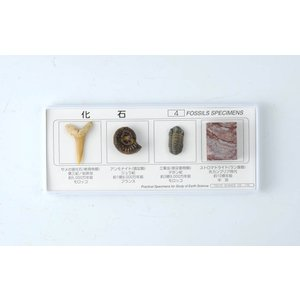 FS005  化石標本4種(解説書付)地質年表と標本のセット kinokuniya