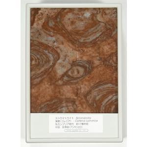 FB004  ストロマトライト   断面研磨 約17億年前|kinokuniya