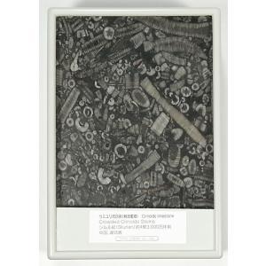 FB023A  海百合の化石(茎部・石灰岩) 断面研磨 kinokuniya