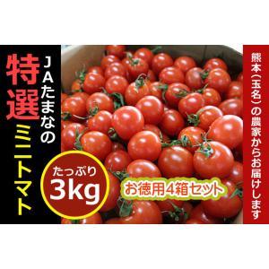 ミニトマト(セット販売4箱)送料無料☆九州・熊本県JA玉名の名産です。|kiramekitamana