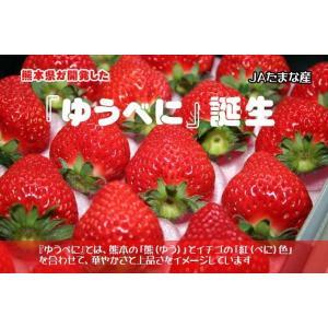 新しい熊本たまなのイチゴ『ゆうべに』270gパック×2個★新品種誕生期間限定特別価格★|kiramekitamana