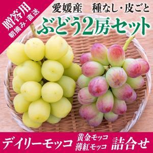 2房モッコ詰合せ(黄金モッコ1房+薄紅モッコ1房) kirari-fruits-farm