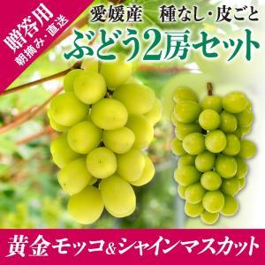 2房詰合せ(黄金モッコ1房+シャインマスカット1房) kirari-fruits-farm