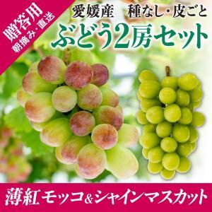 2房詰合せ(薄紅モッコ1房+シャインマスカット1房) kirari-fruits-farm