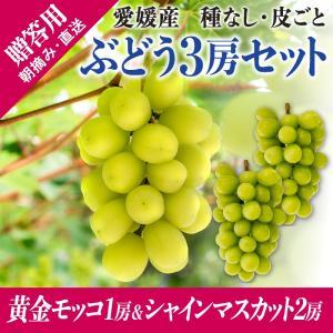 3房詰合せ(黄金モッコ1房+シャインマスカット2房) kirari-fruits-farm