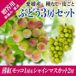3房詰合せ(薄紅モッコ1房+シャインマスカット2房) kirari-fruits-farm