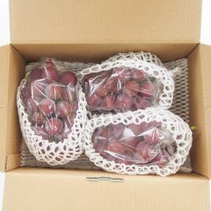秋ぶどう 赤いピオーネ 約2kg 3〜4房入り 農家直送 愛媛県産 ご家庭用 9月発送|kirari-fruits-farm