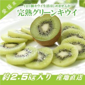 キウイフルーツ グリーンキウイ ヘイワード 約2.5kg入り 23〜28個入り 農家直送 愛媛県産|kirari-fruits-farm