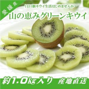 キウイフルーツ グリーンキウイ ヘイワード 約1.0kg入り 10〜13個入り 農家直送 愛媛県産|kirari-fruits-farm