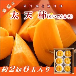 愛媛県産 柿 太天柿 6個入り 農家直送 ただ今発送中|kirari-fruits-farm