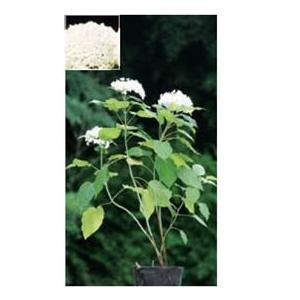 【オンリーワン】人気の花木をお届けします。