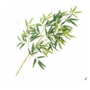 【人工植栽】 タカショー グリーンデコ和風 モウソウ竹 リーフ 枯色 L80cm GN-14Y
