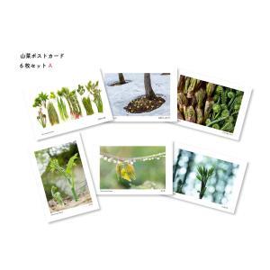 山菜ポストカードセットA(6枚入り) kiru-sansai