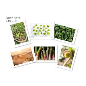 山菜ポストカードセットB(6枚入り) kiru-sansai