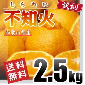訳あり 不知火 しらぬい (デコポン同品種) 2.5kg 和...