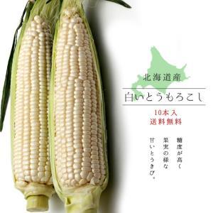 白いとうもろこし (ピュアホワイト) 北海道産直 朝もぎとうきび(10本) 生でも美味しいフルーツトウモロコシ 送料無料|kissui