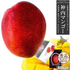 神内マンゴー秀品4Lアップ1玉 化粧箱(北海道産 完熟マンゴー)糖度14度以上 (アップルマンゴー アーウィン種)(送料無料)】|kissui