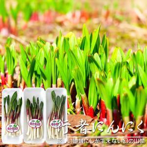 行者にんにく50g×3パック(北海道産)ハウス栽培 春の山菜 幻の山菜(ヒトビロ キトピロ ヒトビル ヤマニンニク エゾネギ)|kissui