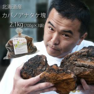 業務用 カバノアナタケ茶塊(原体)2.1kg(700g×3袋セット)北海道産チャーガ茶100%(かばのあなたけ茶)樺孔茸茶 チャーガティ【送料無料】|kissui