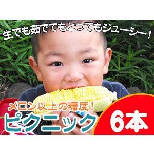 ピクニックコーン 6本 北海道産とうもろこし【北海道とうきび】生でも美味しい産地直送フルーツトウモロコシ ※送料無料|kissui