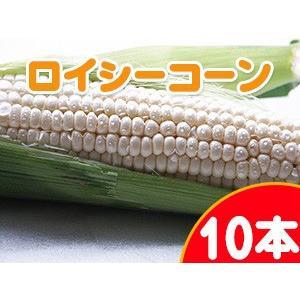 ロイシーコーン(白いとうもろこし) 10本 北海道産直朝もぎとうきび♪ピュアホワイトを凌ぐ新品種ホワイトコーン ※送料無料|kissui