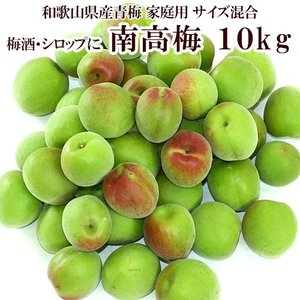 紀州グルメ 梅酒用 紀州南高梅 青梅10kg(サイズ混合/家...