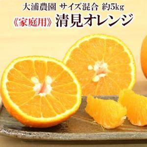 清見オレンジ 家庭用 約5kg サイズ混合 送料無料 大浦農園 和歌山県産 2月中旬頃から順次発送予定|kisyugurumeichiba