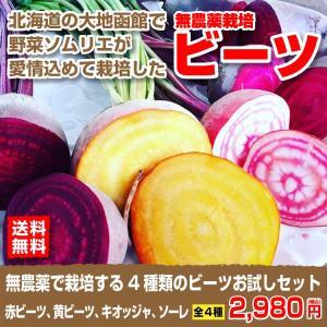 北海道の野菜ソムリエが育てた無農薬栽培の西洋野菜ビーツお試しセット|kita-marche