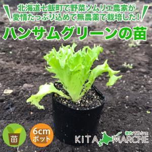ハンサムグリーン 苗 1株 250円/北海道からお届けする農家が育てた西洋野菜の苗|kita-marche