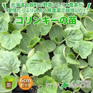 コリンキー 苗 1株 250円/北海道からお届けする農家が育てた西洋野菜の苗|kita-marche