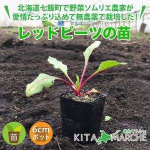 レッドビーツ 苗 1株 250円/北海道からお届けする農家が育てた西洋野菜の苗|kita-marche
