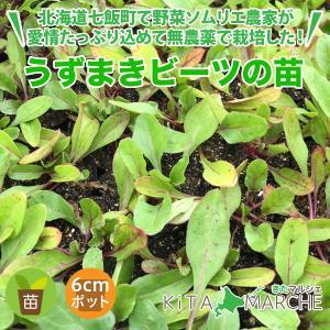 うずまきビーツ 苗 1株 250円/北海道からお届けする農家が育てた西洋野菜の苗|kita-marche