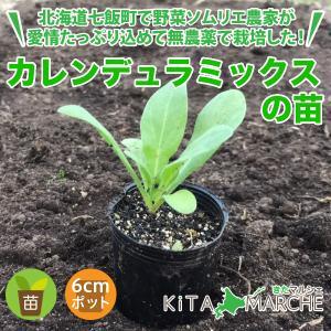 カレンデュラミックス 苗 1株 250円 食用 キンセンカ/北海道からお届けする農家が育てた西洋野菜の苗|kita-marche