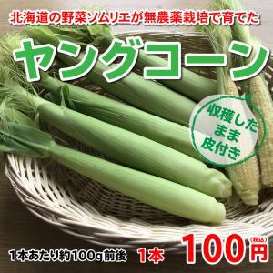 【ただいま収穫中!】北海道の野菜ソムリエが育てた北海道産ヤングコーン 約100g前後
