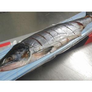 北海道産新巻鮭(秋鮭)姿造り2.2kg〔E〕北港直販☆しゃけ・シャケ|kitachokuhan