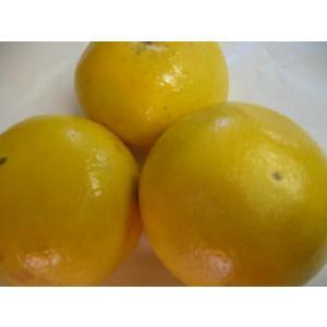 海外産グレープフルーツMサイズ5個〔C〕北港直販☆|kitachokuhan