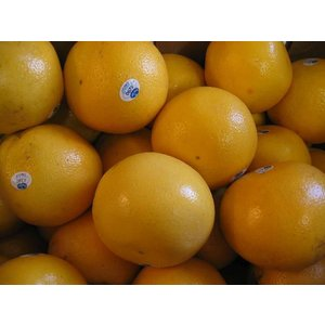 海外産グレープフルーツMサイズ20個〔C〕北港直販☆|kitachokuhan