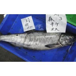 〔送料無料〕北海道産生鮭3kg以上(オス)北港直販☆しゃけ・シャケ〔同梱不可〕〔着日指定不可〕|kitachokuhan