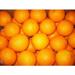アメリカ産オレンジMサイズ20個〔C〕北港直販☆おれんじ|kitachokuhan