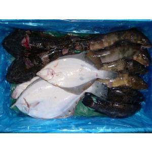 〔送料無料〕お試し北海道産鮮魚セット〔E〕北港直販〔同梱不可〕〔着日指定不可〕貝|kitachokuhan