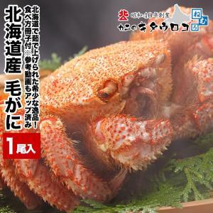 カニ 年末予約受付中 かに 蟹 北海道産 毛がに 350g前後×1尾入 送料無料 毛蟹 毛ガニ ギフト|kitauroko