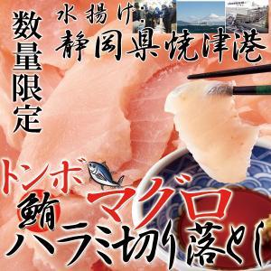 マグロ まぐろ びんちょうマグロ 刺身 訳あり ハラミ 切り落とし 冷凍 本場 ビントロ 500g 〔A冷凍〕|kiwami-honpo