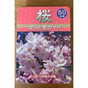桜ぱっと見ガイド|kiyotakinursery