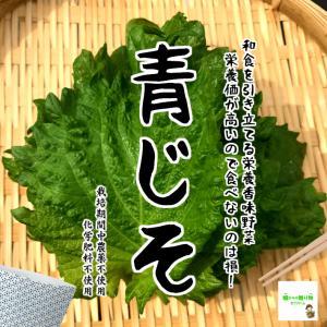 青じそ(大葉) 栽培期間中農薬不使用・化学肥料不使用 1袋約15枚(虫食いがある場合あり) ※茎についたままお届けする場合があります。