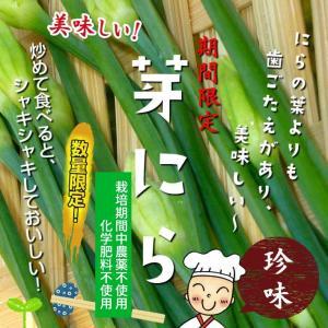 芽にら(食用花ニラ) 栽培期間中農薬不使用 1束約100g♪