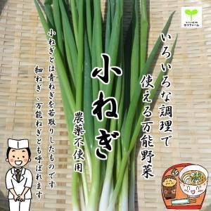 小ねぎ(こねぎ、細ねぎ、万能ねぎ) 栽培期間中農薬不使用 1束|kizufarm