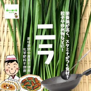 ニラ(にら、韮) 栽培期間中農薬不使用 1束約150g♪